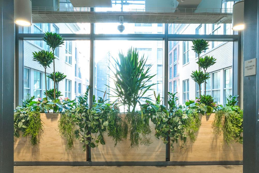 Ted_Talks_Office_Plants_1