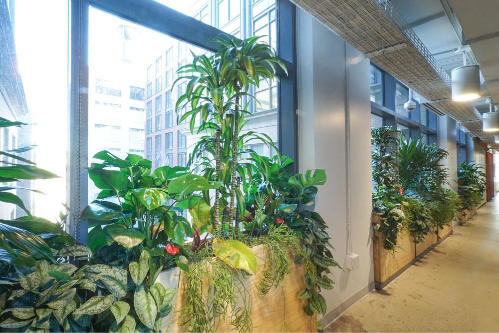 Ted_Talks_Office_Plants_2