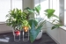 Ted_Talks_Office_Plants_4