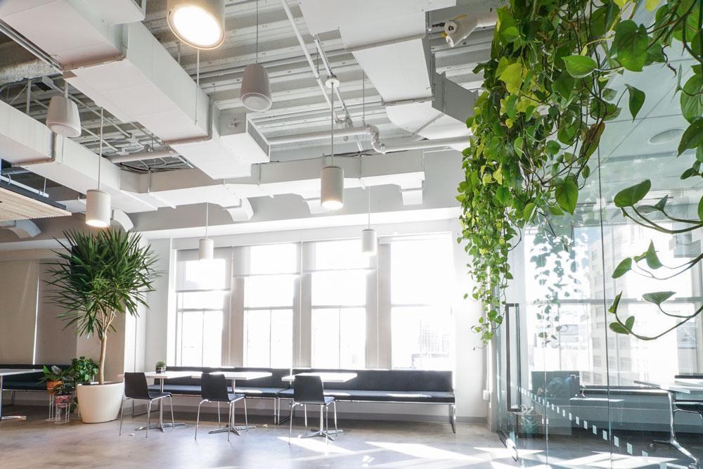 Ted_Talks_Office_Plants_76