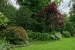 Great-Neck-Backyard-3