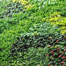 Green Walls Greenery Nyc A Biophilic Design Company