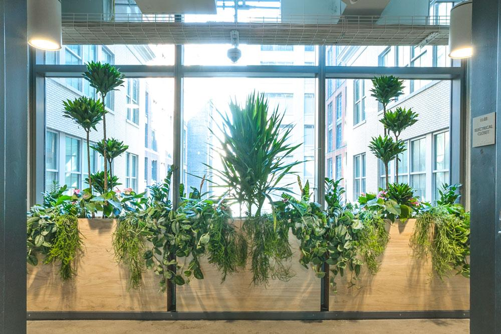 Ted_Talks_Office_Plants_1
