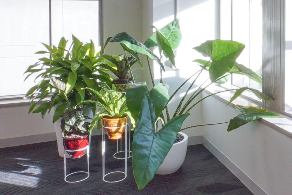 Ted_Talks_Office_Plants_4